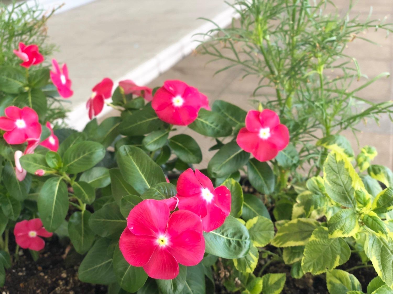 咲く 花 今